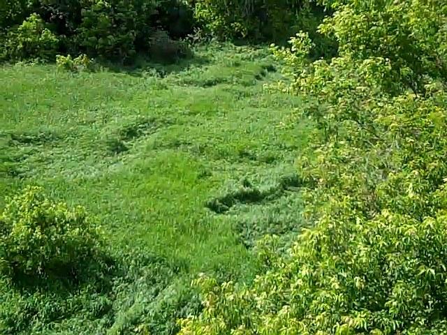 (ok grass Circles)